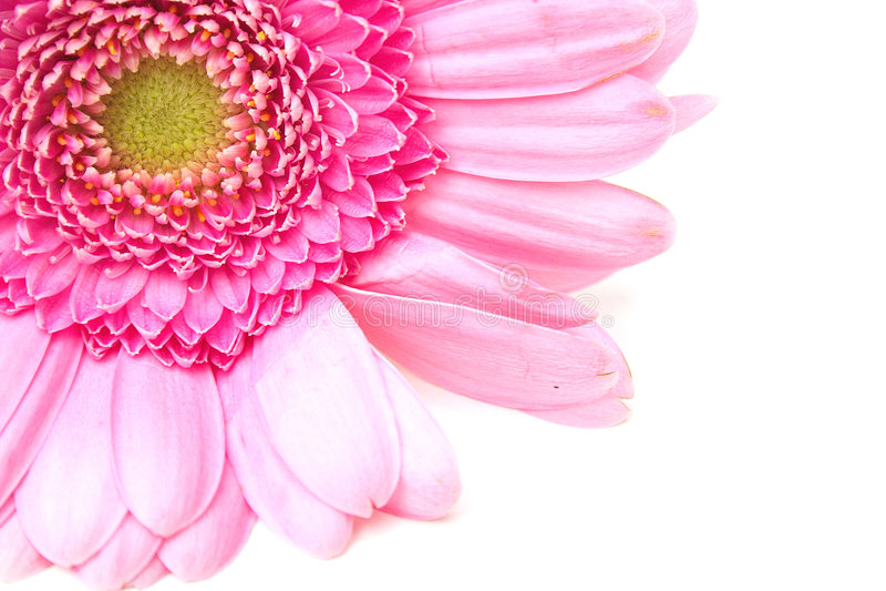 Download Zinnia nell'angolo immagine stock. Immagine di flora, macro - 221535
