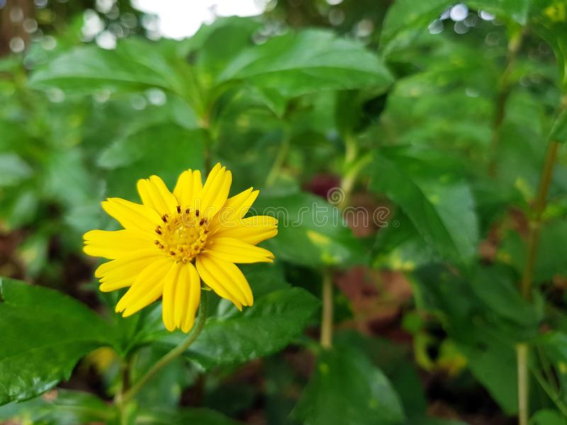 Zinnia flowers make a massive burst of color in your garden royalty free stock photo
