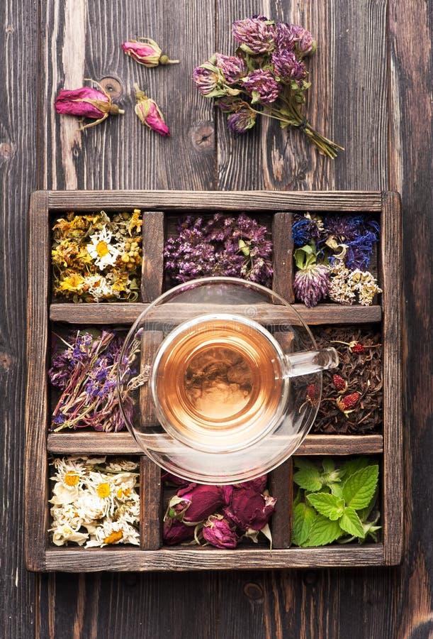 Ziołowa herbaciana filiżanka i leczniczy ziele w drewnianym pudełku zdjęcie stock