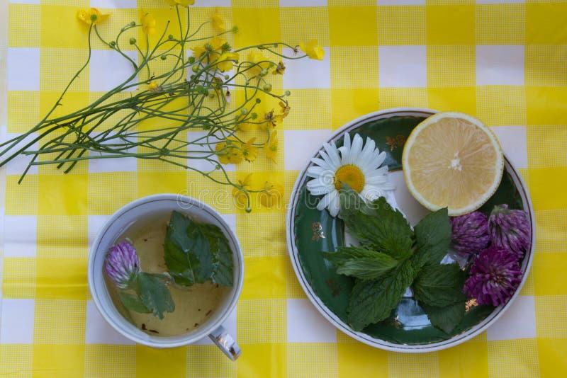 Ziołowa herbata w filiżance Spodeczek z świeżymi nowymi liśćmi, koniczynowy flowe zdjęcia stock