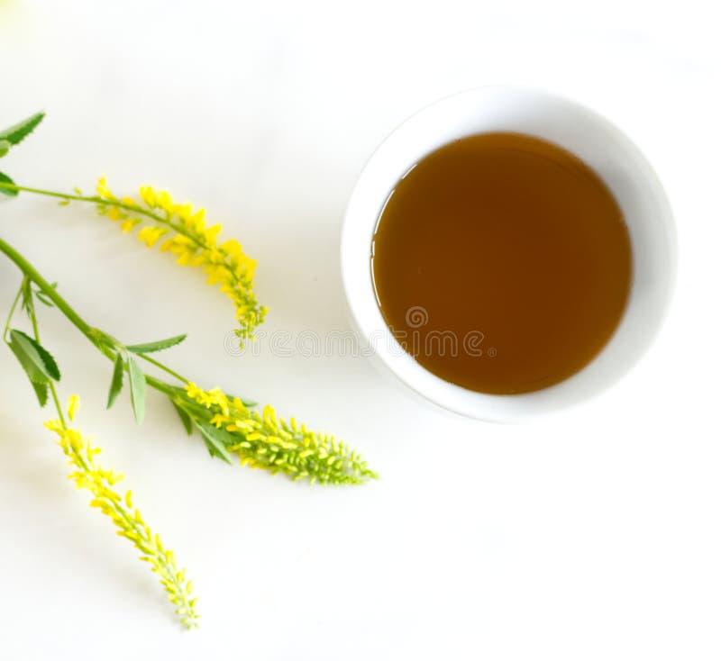 Ziołowa herbata w porcelany filiżance Melilotus officinalis, znać jako żółta słodka koniczyna na bielu stole U?ywa? w zio?owej me obrazy royalty free