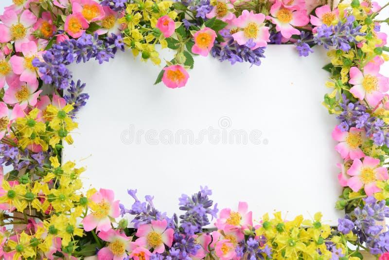 Ziołowa kwiat rama zdjęcie stock
