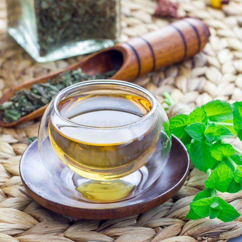 Ziołowa nowa herbata w orientalnej szklanej filiżance z świeżą miętówką i herbacianą miarką na tle, kwadratowy format fotografia royalty free