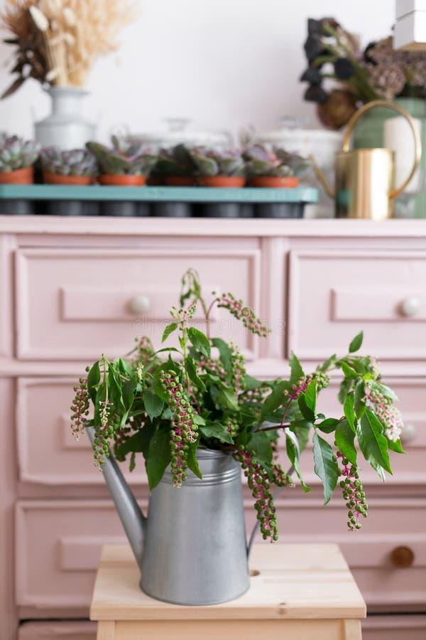 Ziołowa roślina: Indiański pokeweed Phytolacca Acinosa co jest w okolicy używać ulgą od bólu zdjęcia stock
