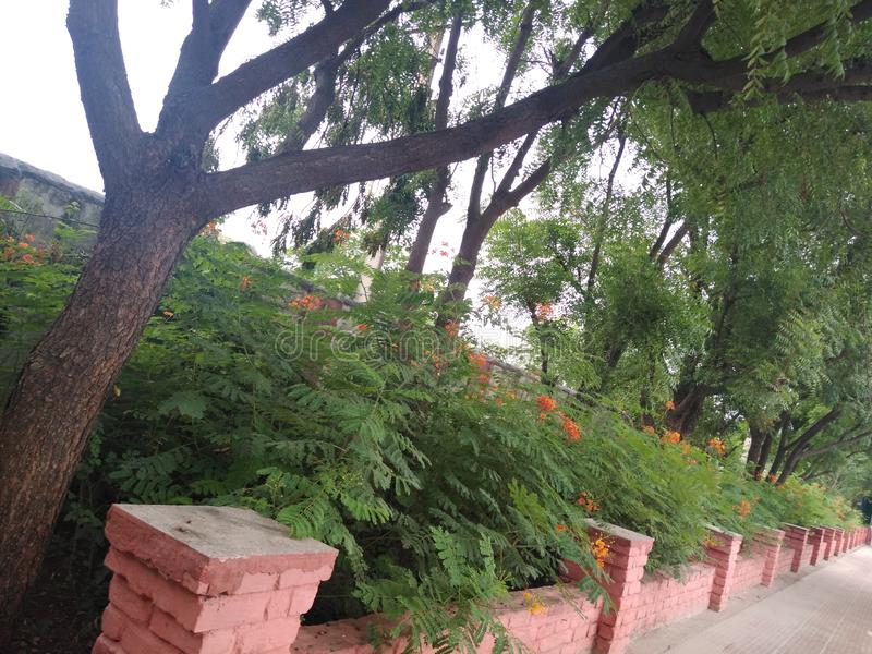 Ziołowi drzewa i kwieciste rośliny obraz royalty free