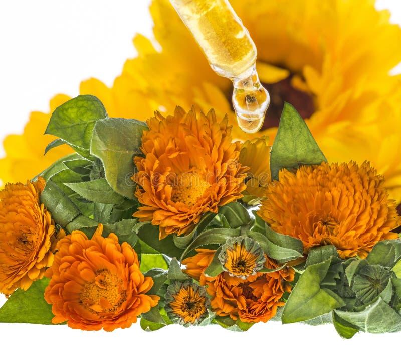 Ziołowy ekstrakt od nagietka kwiatu obrazy royalty free