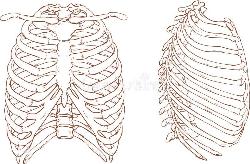 Ziobro klatki ilustracja ilustracji