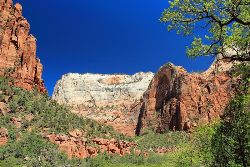 Zion Canyon da Emerald Pools Trail, Zion National Park, Utah immagine stock libera da diritti
