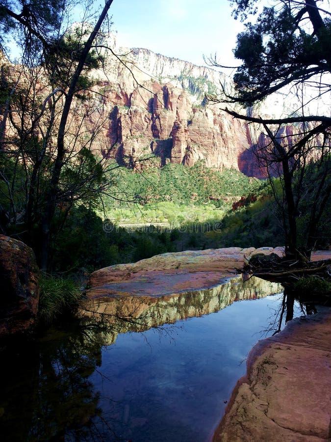 Zion Cliffs e visualizzazione ad albero fotografia stock