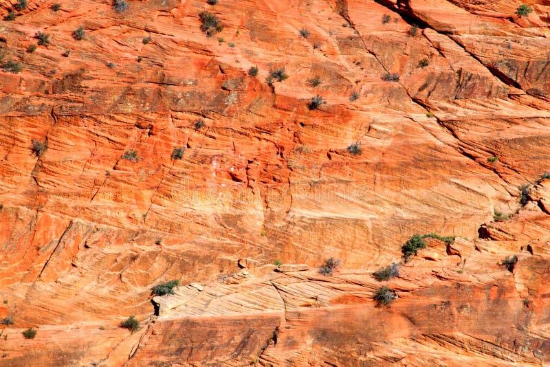 zion för nationalparkrocksandsten arkivfoto