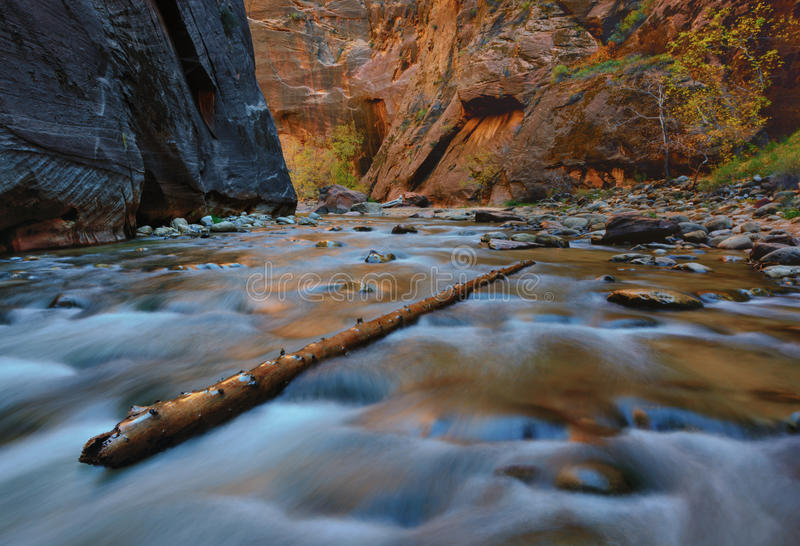 Zion Narrows Utah arkivfoton