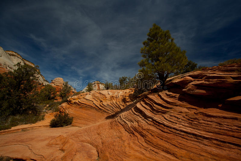 Download Zion National Park stock photo. Image of formation, pine - 24285338