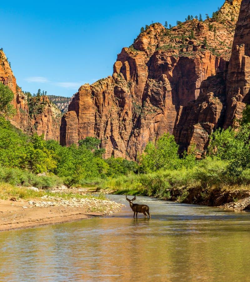 Zion National Park imágenes de archivo libres de regalías