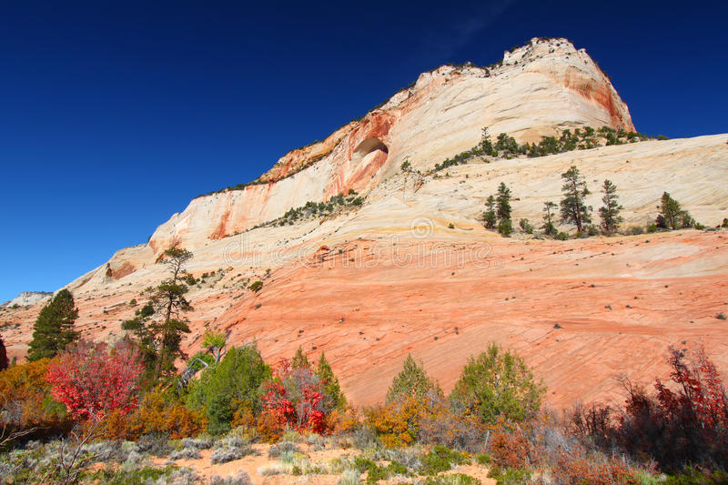 Zion National Park Geology. Vegetation below beautiful geological features of Zion National Park in Utah stock photo