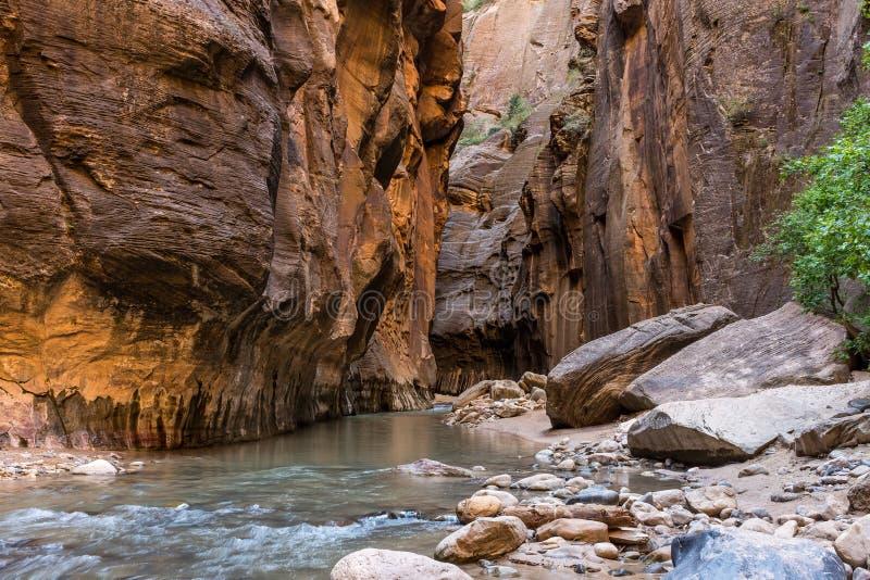 Zion National Park incrível, o rio do Virgin que corre através dos estreitos imagens de stock