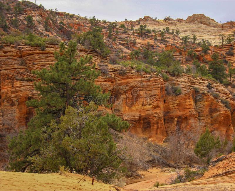 Zion National Park-Utah images libres de droits