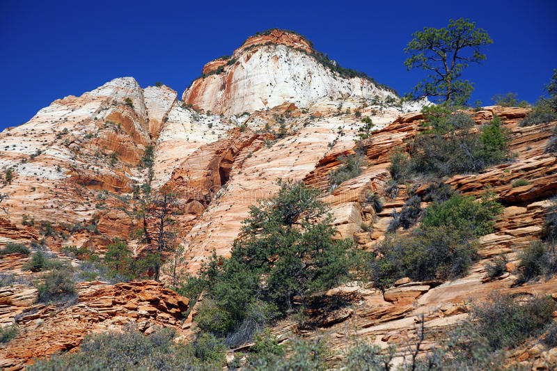 Zion National Park, Utah, Etats-Unis photo libre de droits