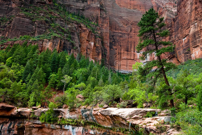 Zion Nationalpark stockbilder