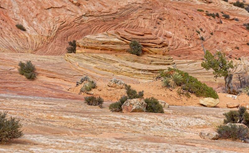 Zion nationalparkliggande fotografering för bildbyråer