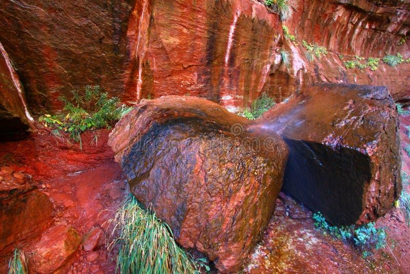 Zion parka narodowego Skalista sceneria obrazy stock