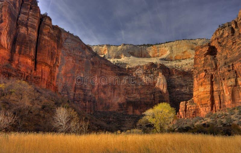 Zion Schluchtfußboden im Herbst stockfotos