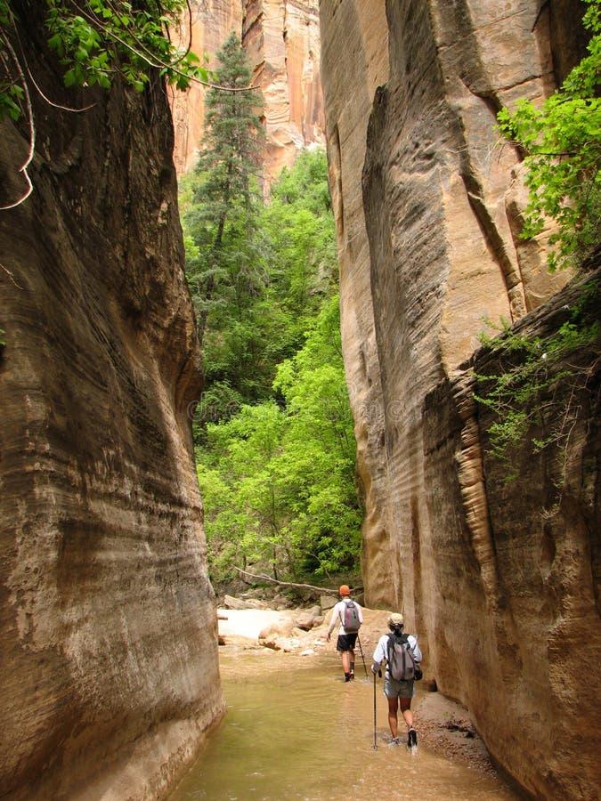 zion virgin узких частей hikers стоковые изображения rf