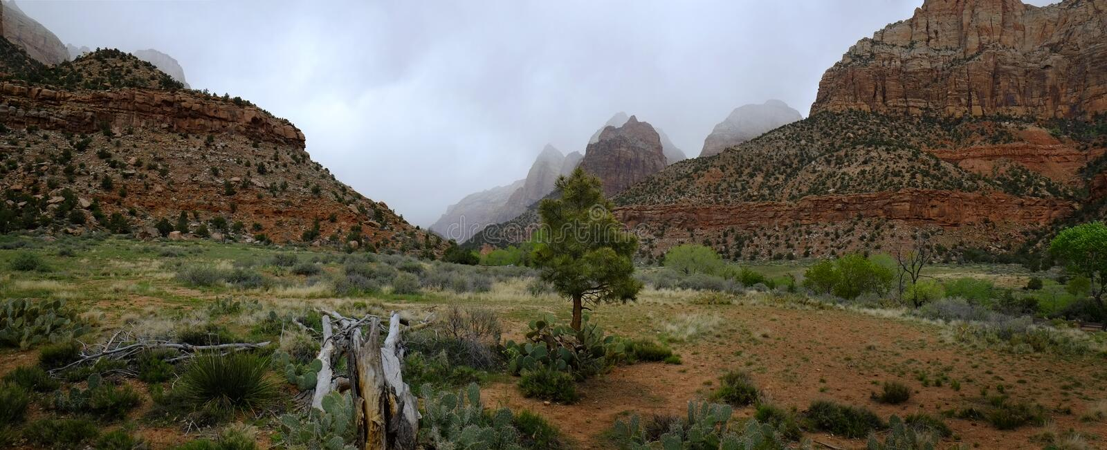 Zions National Park Mountains Rainstorm Trees Foliage. Zions National Park mountain in rainstorm with trees and foliage stock photos