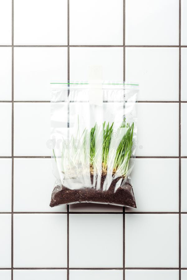 ziplock πλαστική τσάντα με το σπορόφυτο και την εδαφολογική ένωση στον τοίχο κεραμιδιών, γη ελεύθερη απεικόνιση δικαιώματος