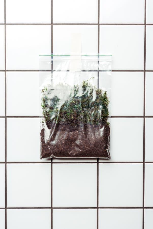 ziplock πλαστική τσάντα με το χώμα και εγκαταστάσεις που κρεμούν στον τοίχο κεραμιδιών, γη διανυσματική απεικόνιση