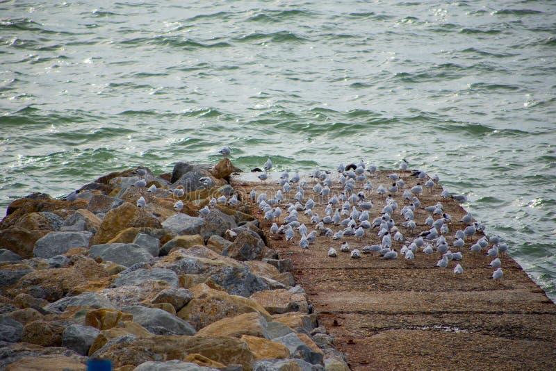 Zit het zeegezicht reusachtige aantal zeemeeuwen op oude steenpijler op achtergrondoverzees stock afbeelding