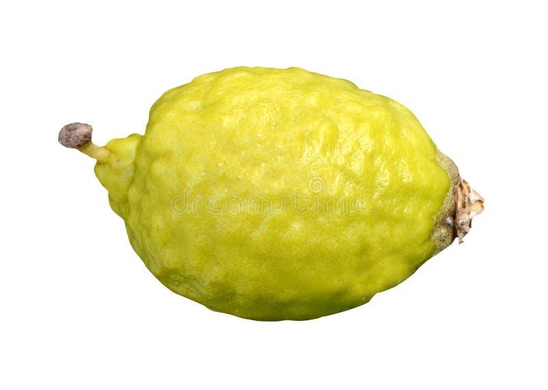 Zitrone lokalisiert auf weißem Hintergrund lizenzfreie stockfotos