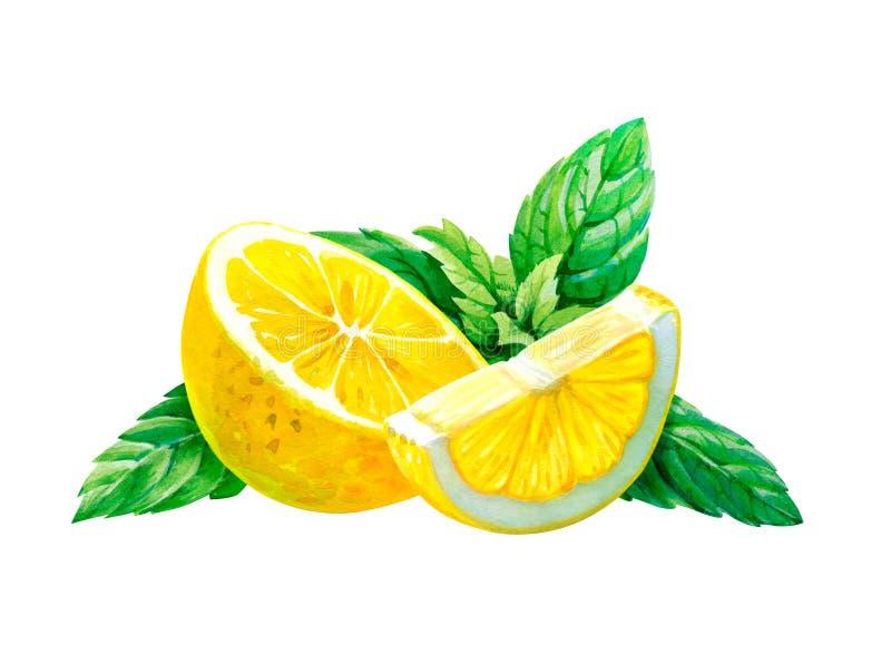Zitrone mit den tadellosen Blättern lokalisiert auf weißer Aquarellillustration stockbilder