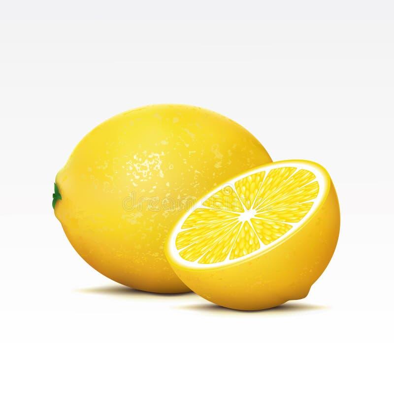 Zitronen vektor abbildung