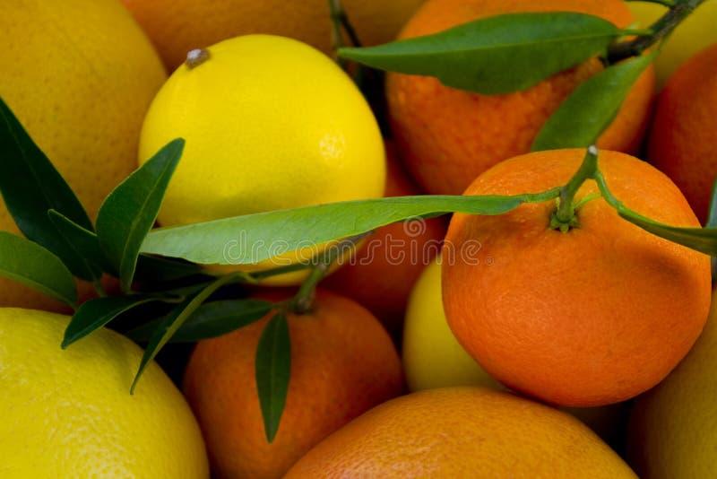 Zitronen- Abschluss oben lizenzfreies stockbild
