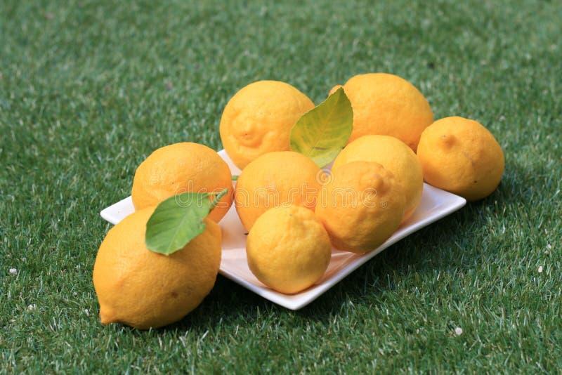 Zitronen auf Gras-Landschaft lizenzfreies stockbild