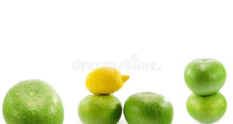 Zitronen- Früchte stockbild