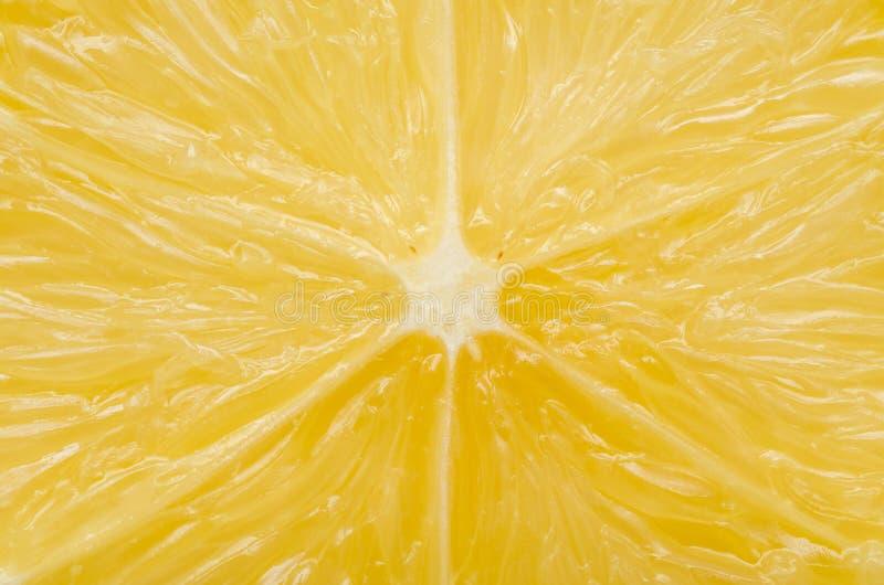 Zitronen-Kapitel stockfotos