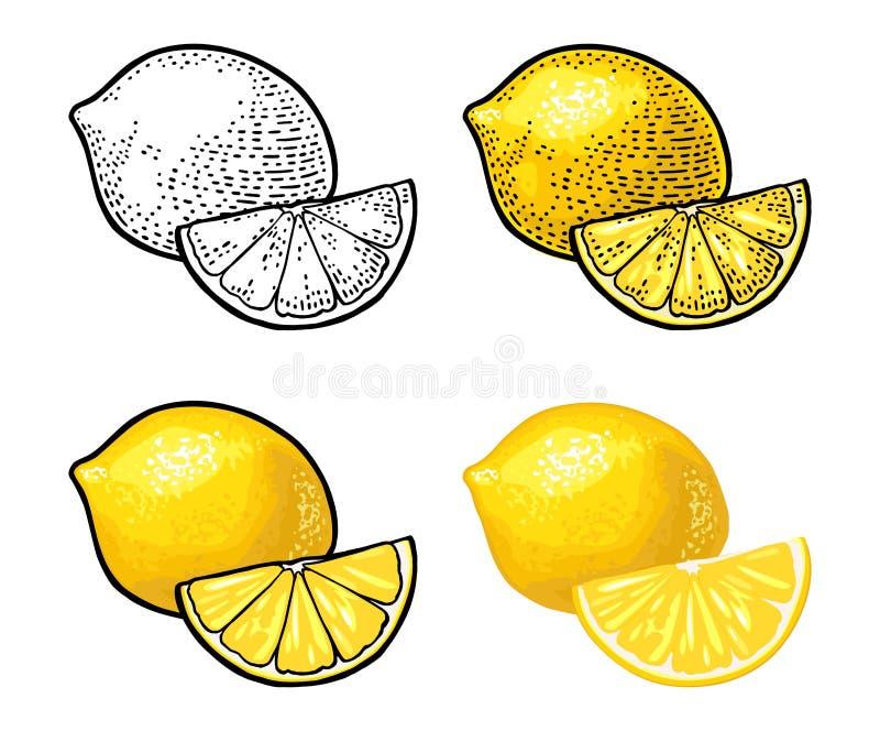 Zitronen-Scheibe und ganzes Vektorfarbweinlesestich und flaches lizenzfreie abbildung