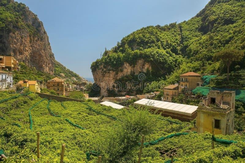 Zitronenbaumplantagen, Amalfi, Golf von Salerno, Italien lizenzfreie stockbilder