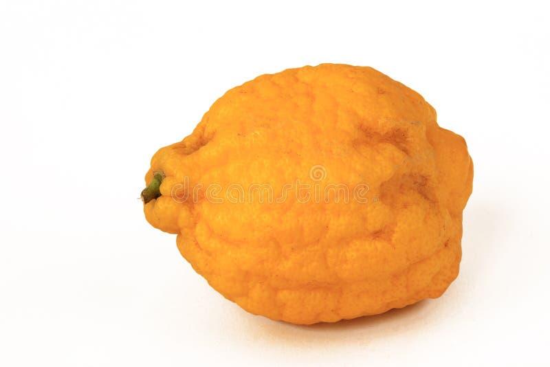 Zitronengelbes Zitrusfrucht medica lizenzfreie stockfotografie