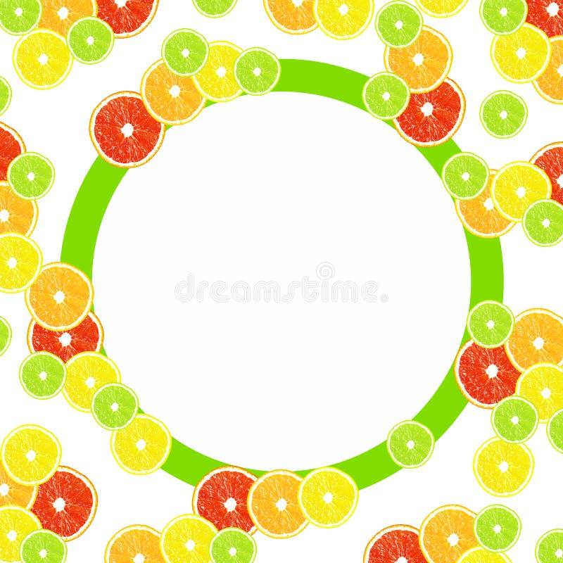 Zitrusfrucht auf einem weißen Hintergrund mit Rahmen vektor abbildung