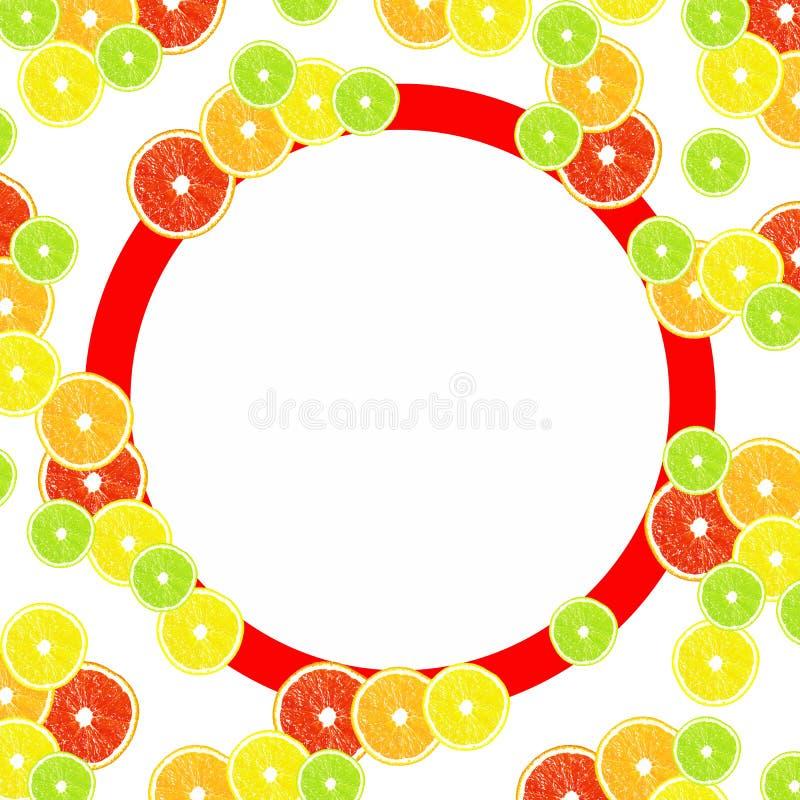 Zitrusfrucht auf einem weißen Hintergrund mit Rahmen für Design vektor abbildung
