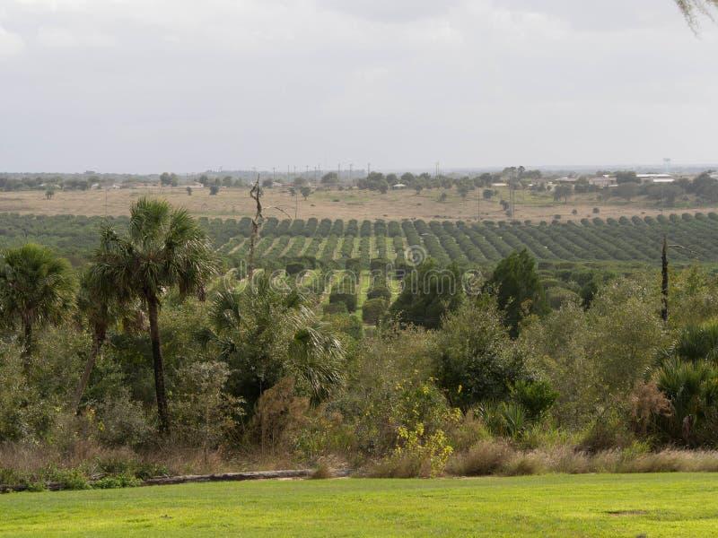 Zitrusfrucht-Baum Grove lizenzfreies stockbild