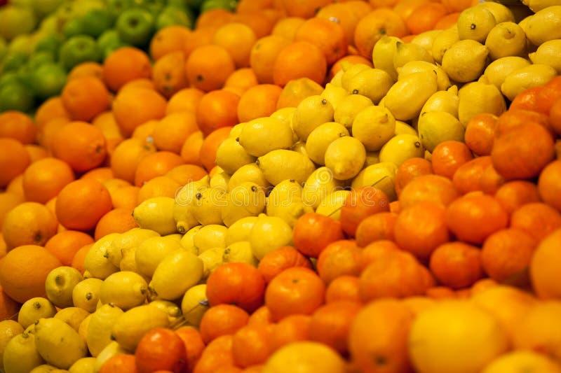 Zitrusfrucht-Gruppe stockbild