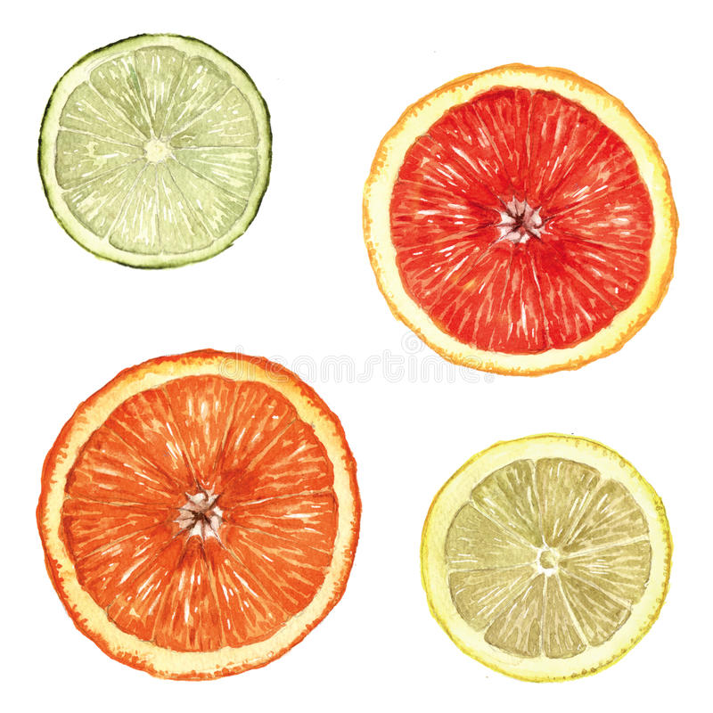 Zitrusfrucht-Scheiben stockfotografie