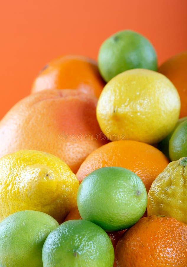 Zitrusfruchtansammlung lizenzfreies stockbild