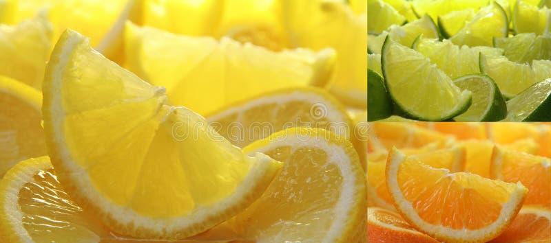 Zitrusfruchtansammlung stockbilder