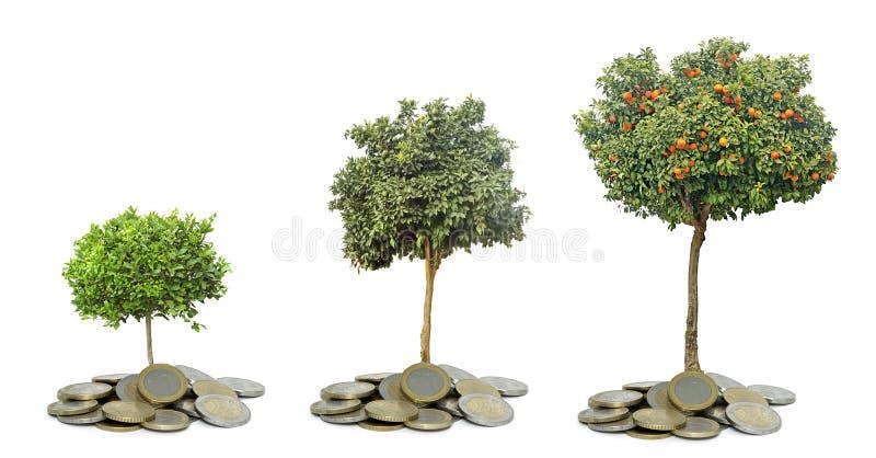 Zitrusfruchtbaum, der von den Münzen wächst lizenzfreie stockfotografie
