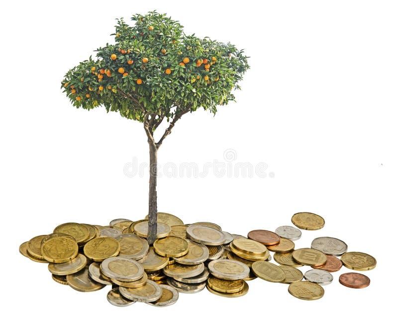 Zitrusfruchtbaum, der von den Münzen wächst lizenzfreies stockbild