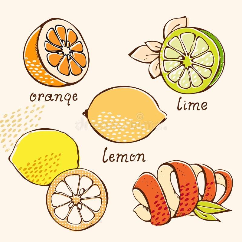 Zitrusfruchtgekritzelset vektor abbildung